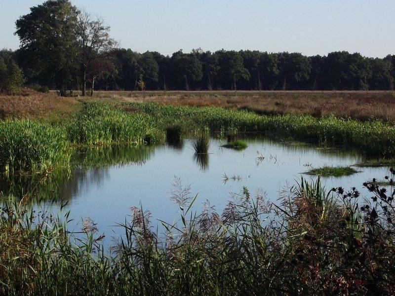 Natuurgebied Kettingdijk