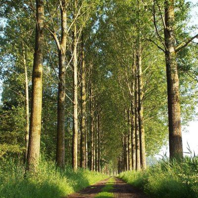 Wandelroute Scheeken-de grote tocht, te Boskant
