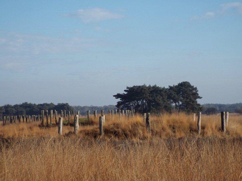 Grafheuvels uit de Midden-Bronstijd (2000-700 v.Chr.)