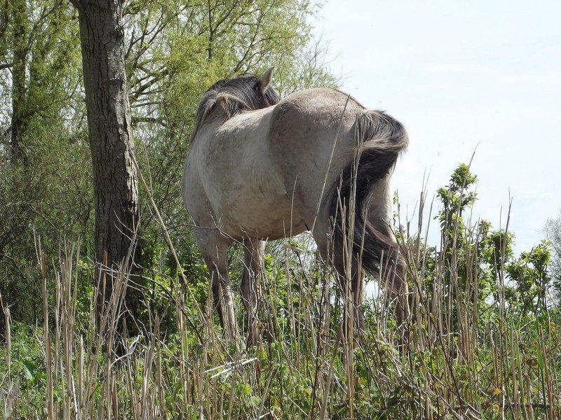 Konikpaard, wat valt er te zien