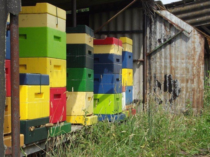 Bijenkasten op Landgoed Genegenterhof