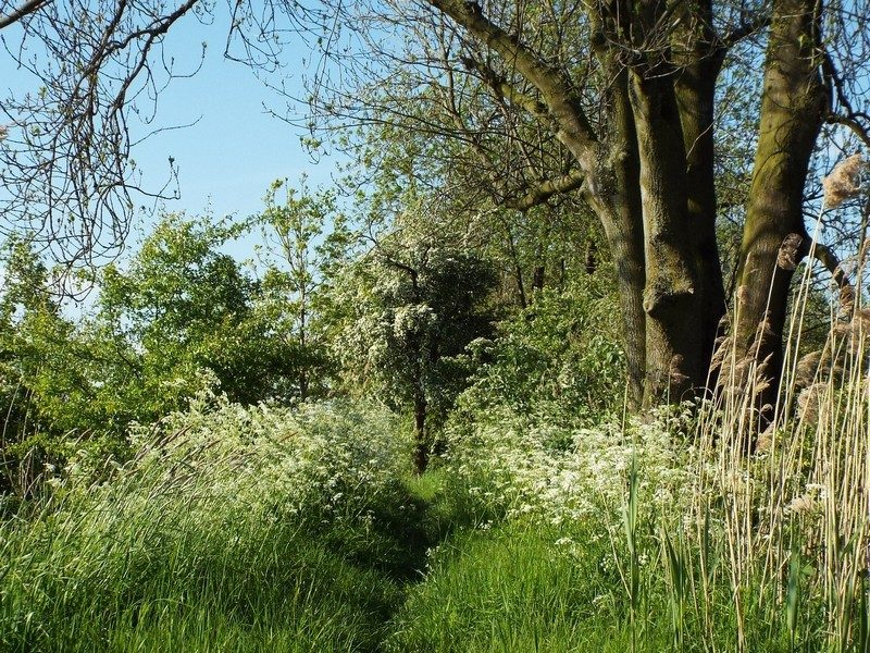 Smal gras-pad langs de Soldatenwiel