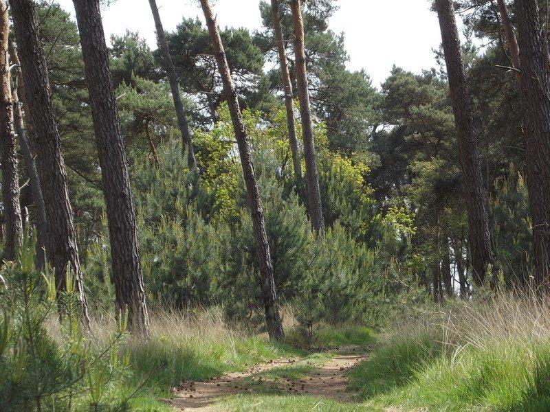 De Plateaux, pad door het bos