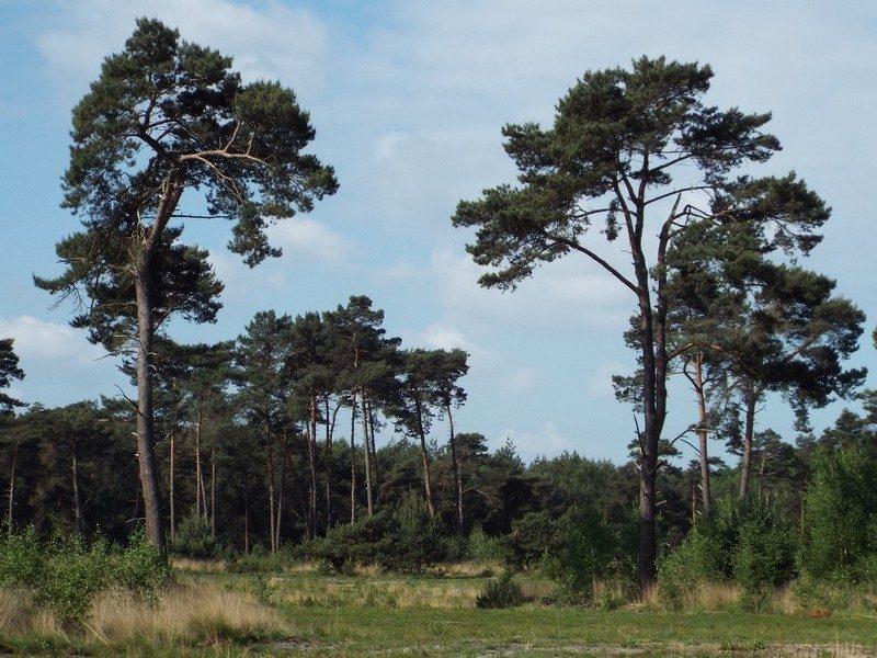 De Plateaux, open plek in het bos