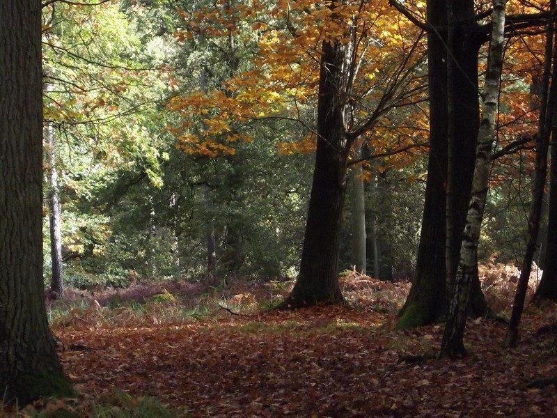 Landgoed de Utrecht in de herfst