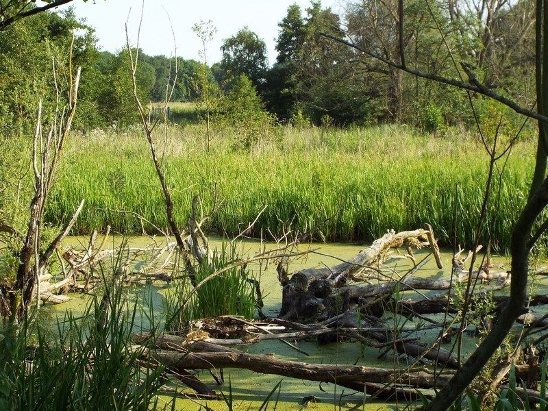 Een van de waterplassen langs het struinpad