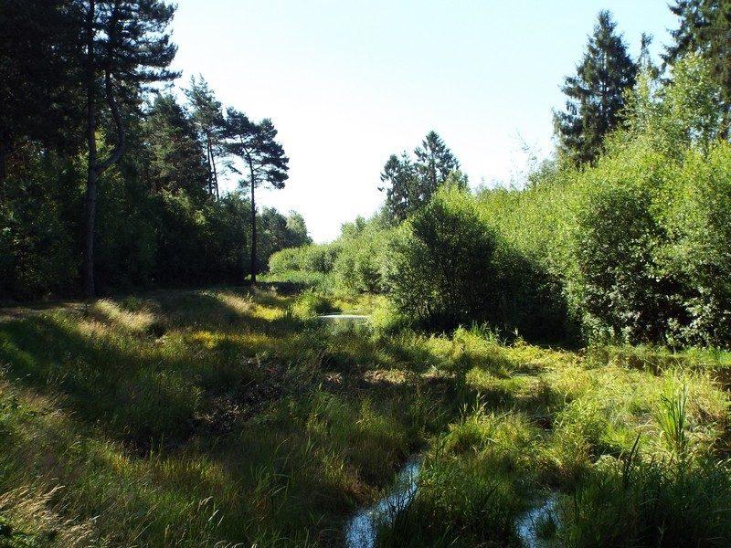 Meanderende beekje de Neerpeelbeek