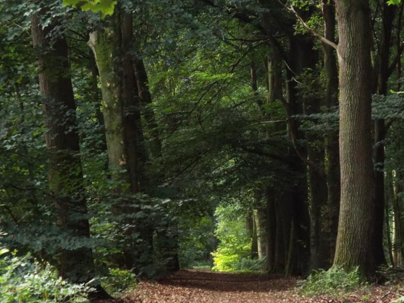 Pad door het Spaanse Bos
