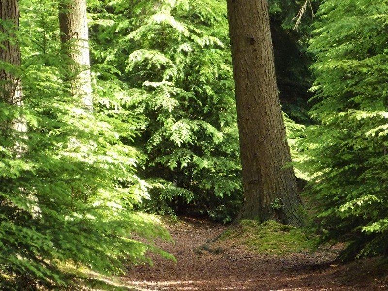 Bosgebied de Somerense Heide