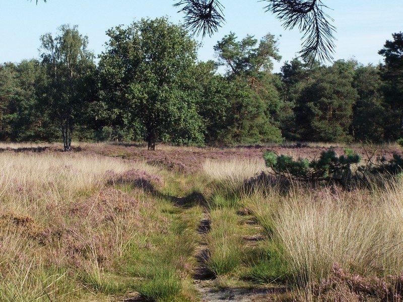 Heidegebied in de Lange Bleek