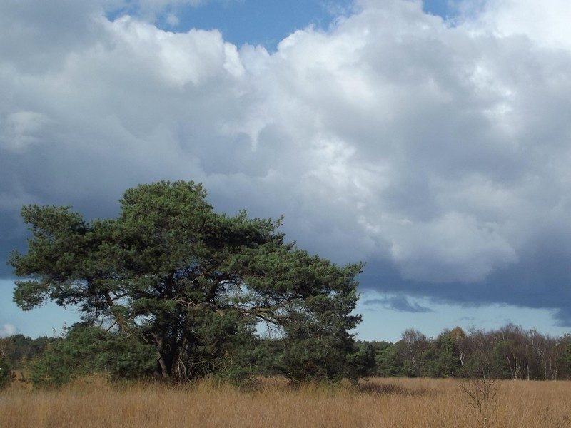 Natuurgebied de Neterselse Heide
