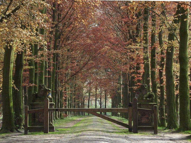 Laan bij kasteel Heeswijk