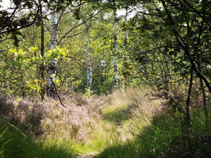 Natuurgebied De Grijze Steen