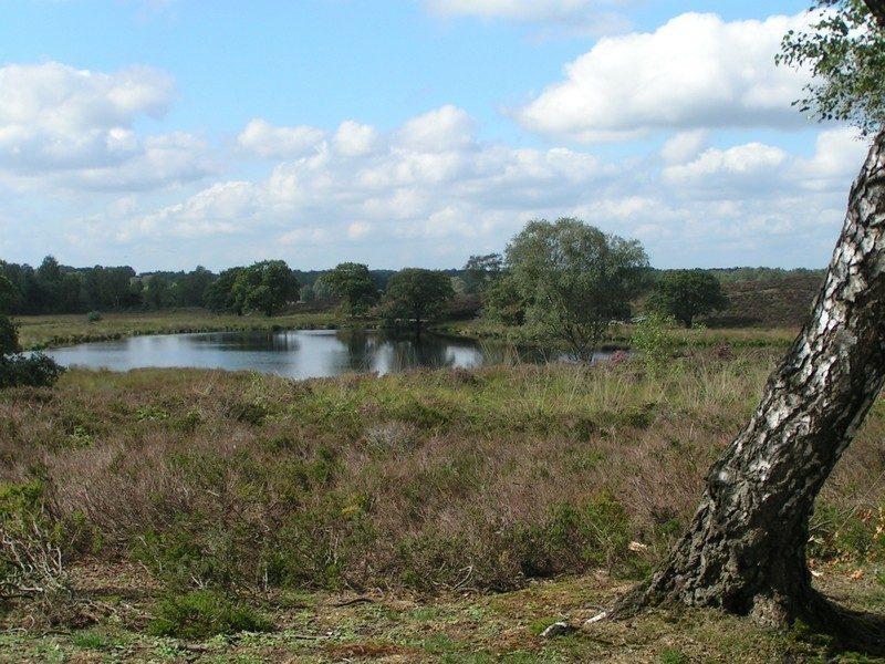 Uitzicht over het Pikmeeuwenwater