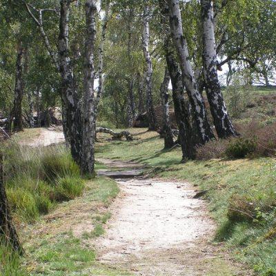 Wandelroute Landgoed de Hamert-tocht, te Wellerlooi
