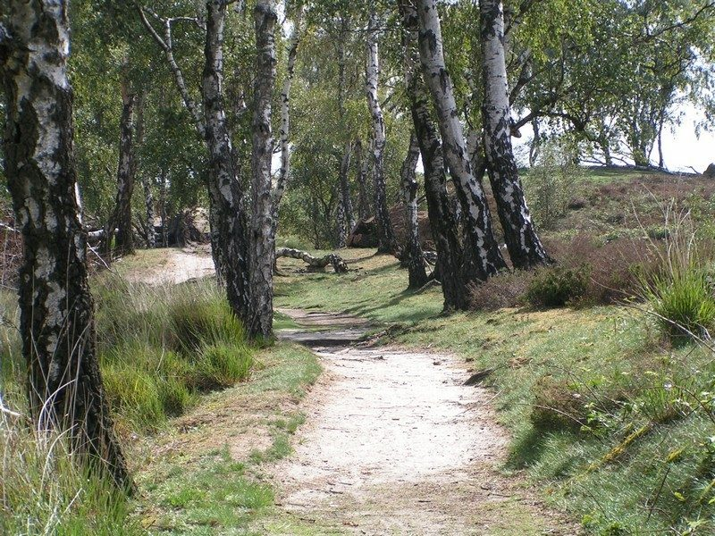 Pad over heuvelrug rond het Pikmeeuwenwater