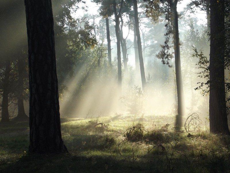 Oisterwijkse Bossen en Vennen in het ochtendlicht