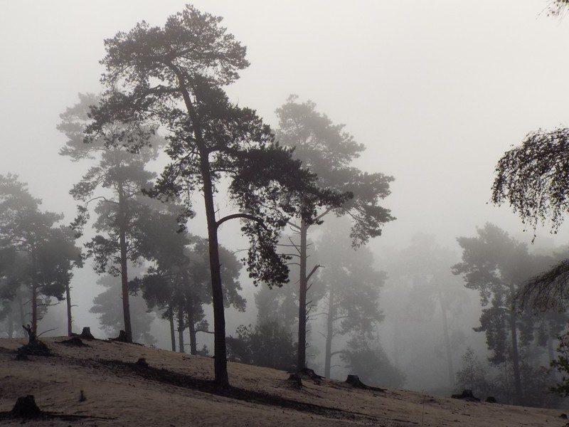 Wellsche Heide, ook met mist kan het mooi zijn