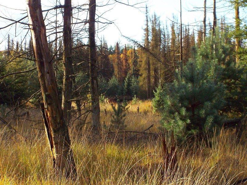 Zicht op bos vanuit het knuppelbrugje