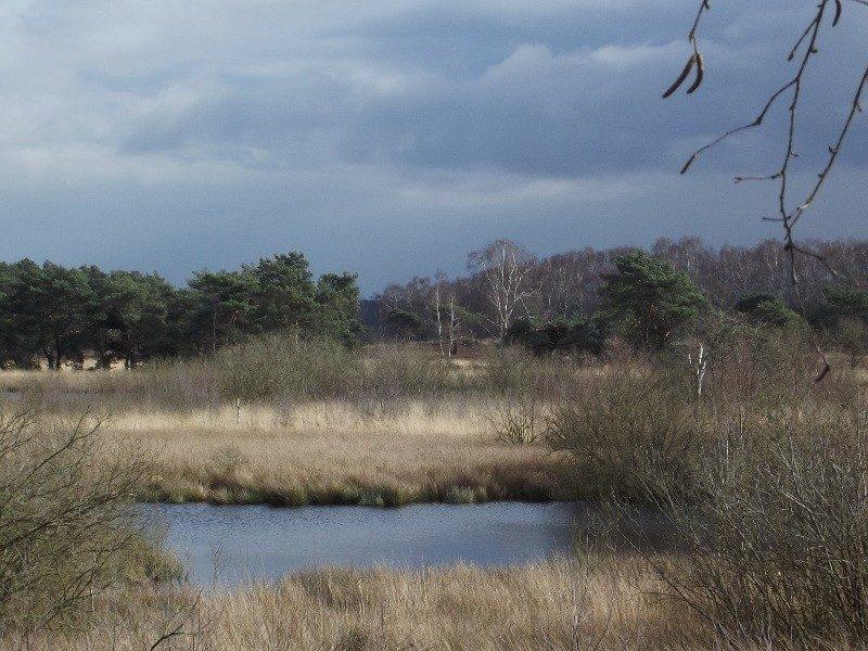 Het Eendenmeer