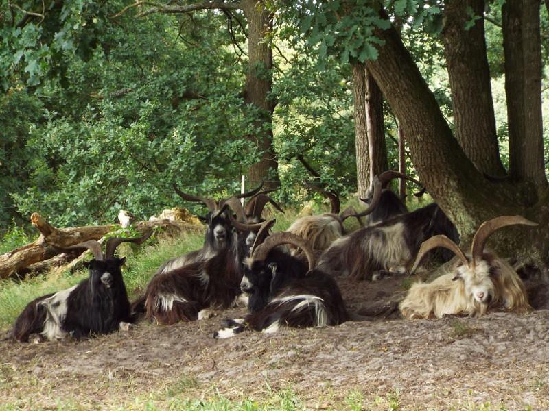 Landgeiten bij de Duivelkuil