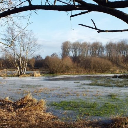 Wandelroute Dommelbeemden-tocht, te Sint-Oedenrode