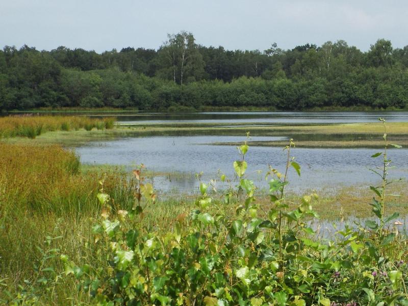 Het Driessenmeer