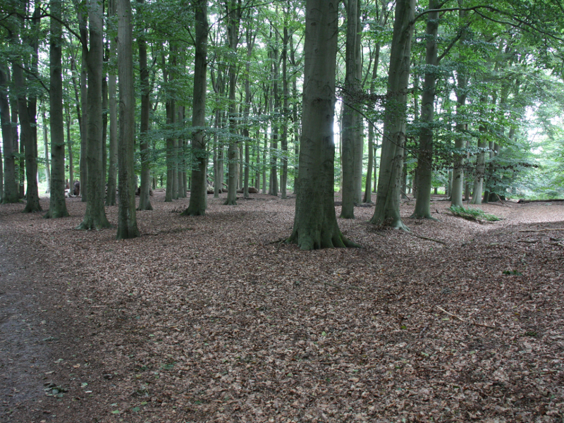 Terug door bos bij Ter Apel