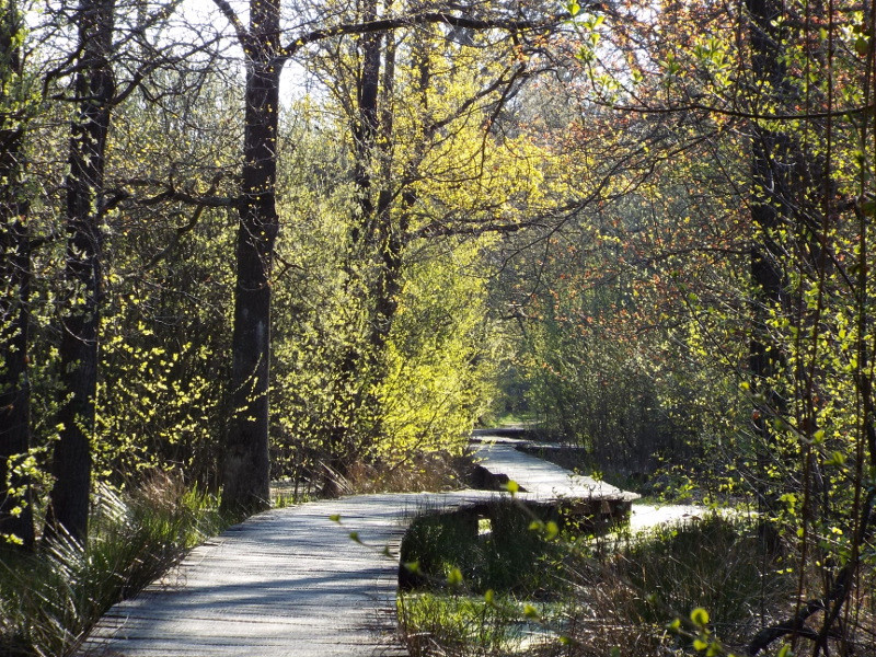Leuk knuppelbrugje in het Cranendoncks bos