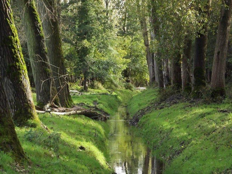 Natuurgebied de Scheeken