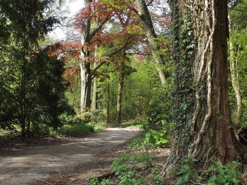 Imposante bomen in landgoed Zegenwerp