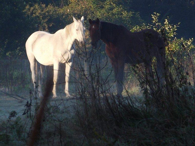 Paarden in het Smalwater