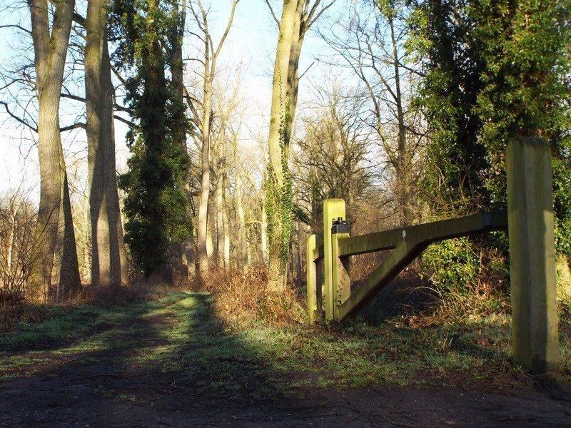 Bospad in landgoed Velder