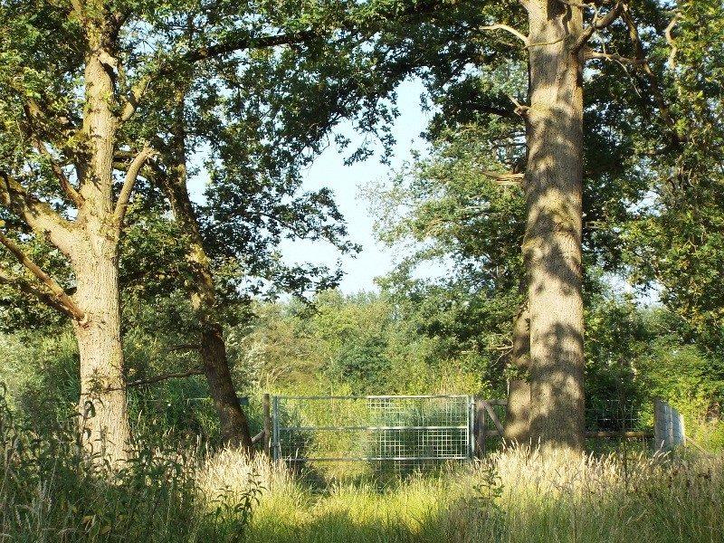 Doorgang begrazingsgebied edelherten
