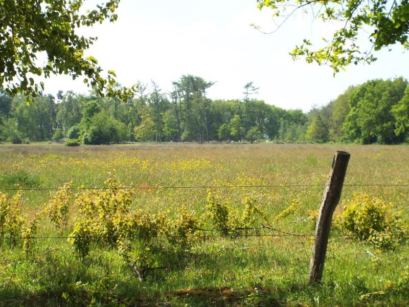 Doorkijk naar grasland