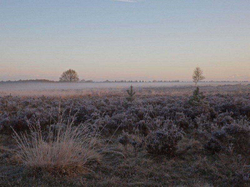 Winter op het Molenveld