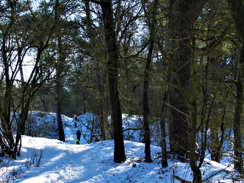 Het Odoornerzand in de winter