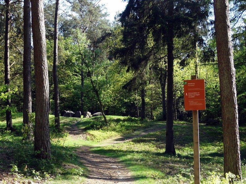 Een Hunebed op een open plek in het bos