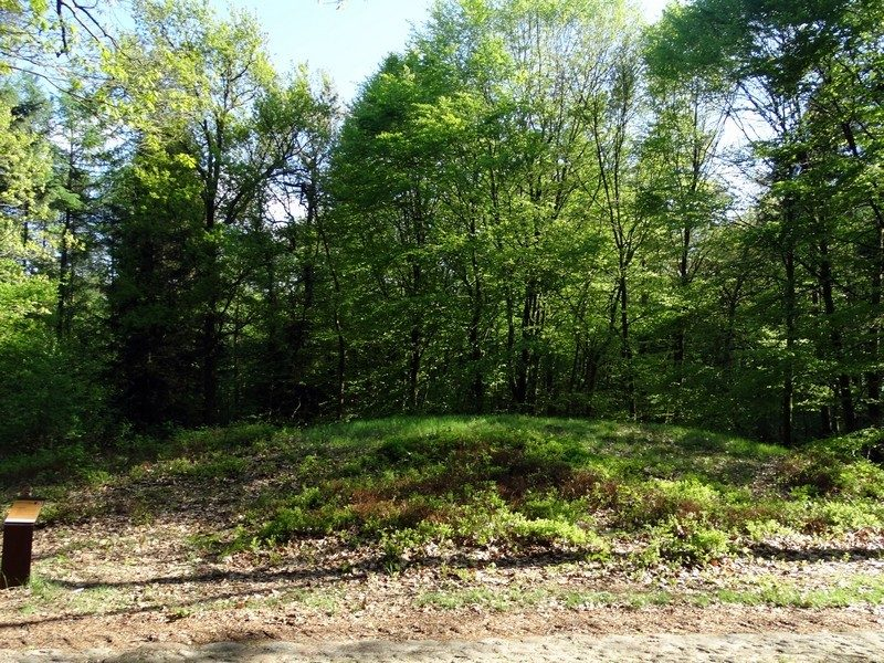 Een grafheuvel midden in het bos