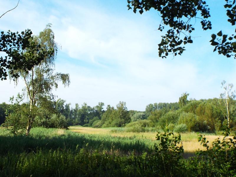 Landgoed Haanwijk, bloemrijk grasland