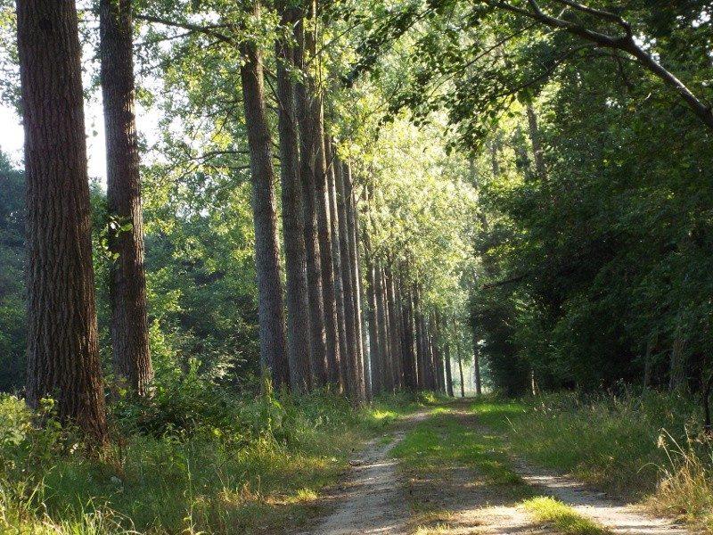 Natuurgebied Scheeken-Mortelen