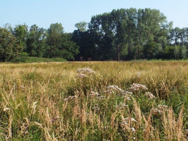 Natuurgebied Scheeken-Mortelen, grasland