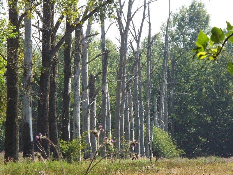De Scheeken, grasland