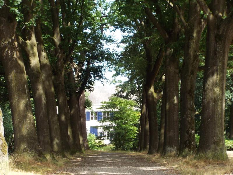 Laan naar landhuis in het park