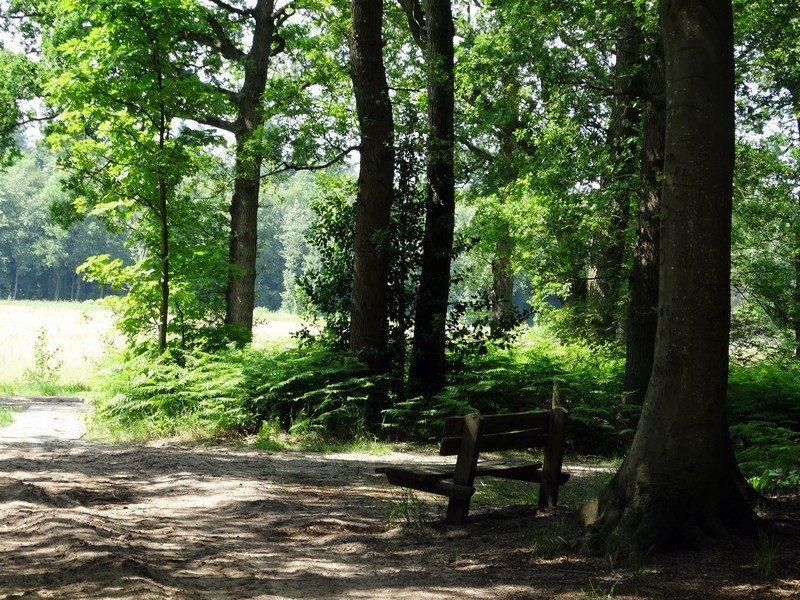 Een bankje bij het Roelagerbos