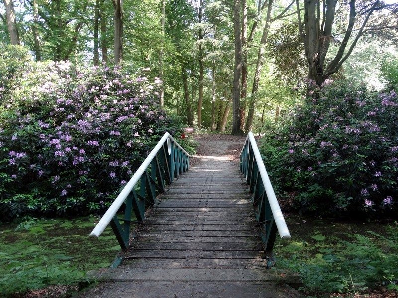 Rododendrons in het Kloosterbos
