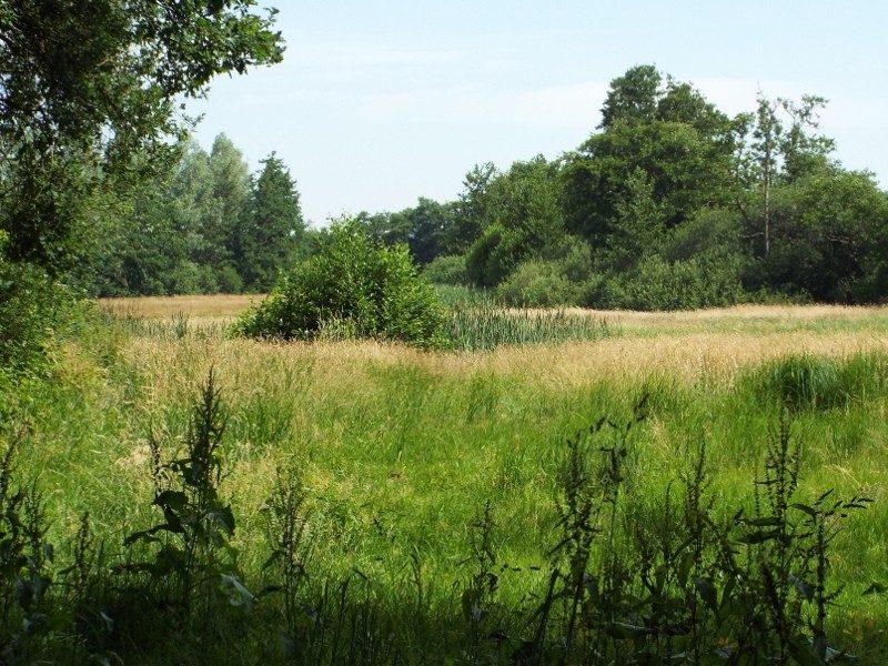 Landgoed Sterrenbosch