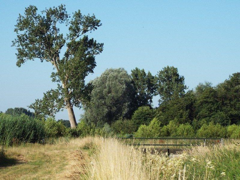 Onderhoudspad langs de Loobeek