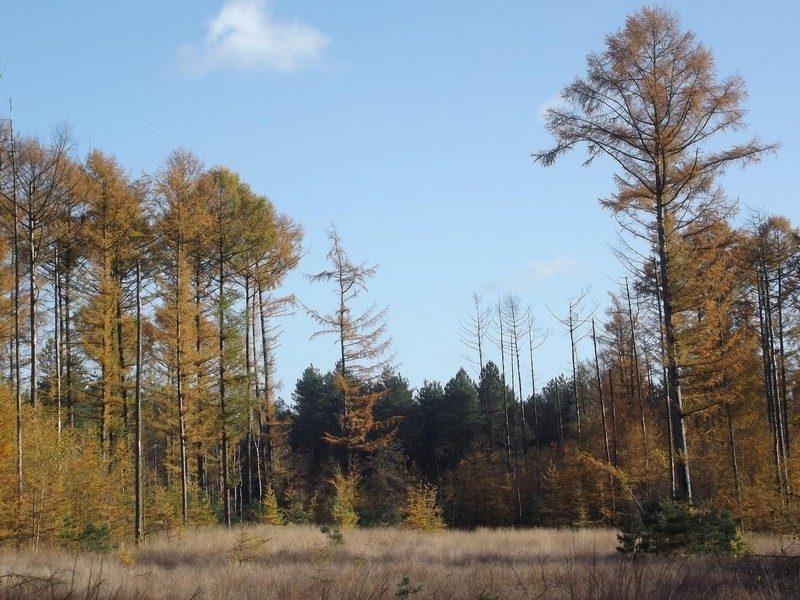 Herfst in de boswachterij