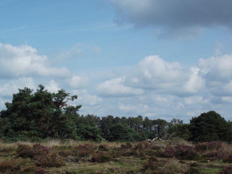 Spijkertse Heide
